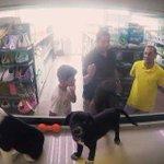 유기동물을 애완동물 가게 진열장에 넣어봤다(실험 동영상) http://t.co/LTlM1G370G #사지마세요입양하세요 #유기동물입양 http://t.co/07QX68dug0