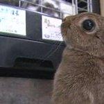 덴마크 한 라디오 방송 진행자가 생방송 도중 태어난 지 9주 된 토끼를 죽여 논란이 일고 있습니다. 진행자는 먹을 계획이라며 죽은 토끼를 가져가 가죽을 벗기기도 했습니다.http://t.co/SpoXZxPBsU http://t.co/q3kM9720uq