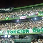 HOJE É DIA DE PALMEIRAS!! 💚 http://t.co/EnghUWYNgL