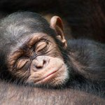 Have a peaceful night, my fellow apes. http://t.co/zLuaNBGpBB