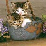 【衝撃】野良猫約600匹を熱湯で殺して食用販売した容疑者男性を逮捕 韓国 http://t.co/7m6l2eIIKI  「猫肉で作るスープは関節炎の治療にいい」という俗説が流行し、信じた人々が猫鍋を買い求めていたという。 http://t.co/V3VYnumd6n