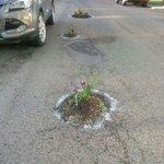 Alcalde, le tapo el hoyo? o le planto el hoyo? #Iquique #Antofagasta http://t.co/vcKdzpjgGn