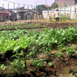 Sayuran Kebun Kelurahan kini sdh mekar @ridwankamil @OdedMD @dispertapa_bdg @DiskominfoBdg @BDGcleanaction @PRFMnews http://t.co/hPWPhXj53f