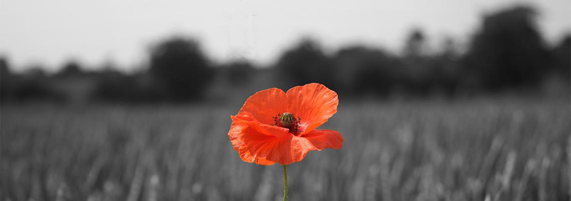An article from the @PoppyLegion on one hundred years of the remembrance poppy http://t.co/3ETA7foZp2 #WWI #WW1 http://t.co/UNxmLGrcKw