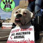 #Cúcuta: Parque Santander 2:30 pm: No mas Maltrato Animal. Favor reportar y daremos RT. http://t.co/Yg6VlQwnNv vía @adopcioncanina