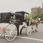 ❤️ our city #Buffalo #MemorialDayWeekend #CanalSide #ErieBasinMarina #fashiontruck #horse #carriage #buffalove http://t.co/htoCncLPWQ