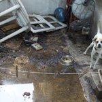 """#SOS """"@ErickSilva09: tienen este perro en abandono en Puerto La Paz 4462 Las Brisas... http://t.co/qrZQ27nIcL"""". #Monterrey #MtyFollow #MTY"""