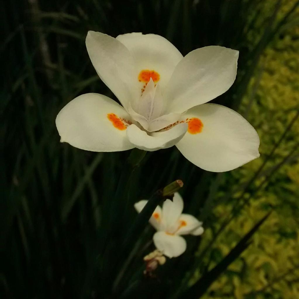 Oh flores! bellas moradoras del silencio encantado de una mirada, su mágico aroma en secreto seduce los sentidos. http://t.co/NzzF1mcyFR