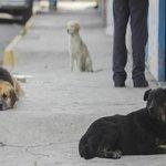 Perros callejeros representan un riesgo para la población: PRI_Nacional http://t.co/jU5V6Nwvfi http://t.co/Ll4ZjWsmzA