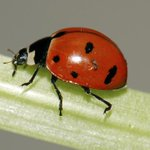 72,000 Ladybugs Released in High School as Senior Prank http://t.co/BXiFGcEeBf http://t.co/viW0HGZ4VF