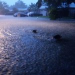 #KHOU Reid Littlejohn shared this photo of dogs swimming in Sugar Land. Dont forget to care for your furry friends! http://t.co/s0xoqUwZZN
