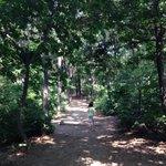 숲을 걷기 좋은 날입니다. 더위에 지쳤다면, 초록에 쉬어가세요. #성남시 #함께걸어요 #초록도시 http://t.co/F9Btlt9Chs