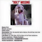 Help find Bolt. Please RT http://t.co/GkvS7SwiuO