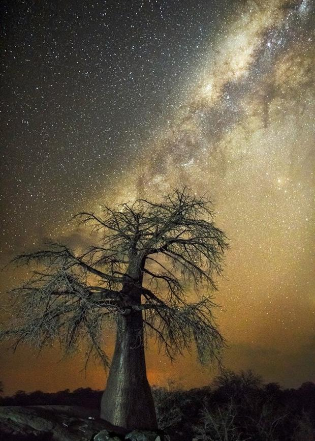 10 Ancient African Trees Illuminated by Starlight https://t.co/UT7LiS3SMs | rt @featureshoot https://t.co/nFmfoIqgZ0