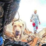 Adiós con honores a Tina y Káiler, dos héroes caninos de Antioquia http://t.co/wXGEuaG7Mq http://t.co/hll9ddivI4
