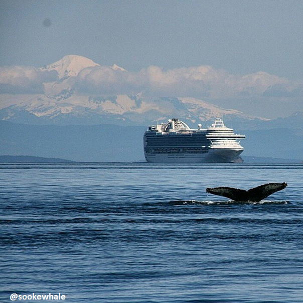 Mt Baker, a cruise ship and a humpback whale, all in one spectacular shot! Just another #VictoriaBC view!  #TTOT #YYJ http://t.co/WoCKmJMZuk