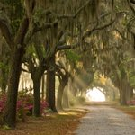 "Savannah is #3 on @CNTravelers list of ""The U.S. Cities That Make the Best First Impression!"" http://t.co/7ykDQmRSDq http://t.co/4jMVJnOJHt"