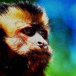 Colombia, el quinto país en número de especies de primates. http://t.co/PCWGND7QiX http://t.co/eMMh00iCbp