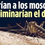 ¿Cómo logran infectar con una bacteria a diminutos mosquitos transmisores del dengue? http://t.co/ecSqljV9Do http://t.co/Ez3jiwaxPK