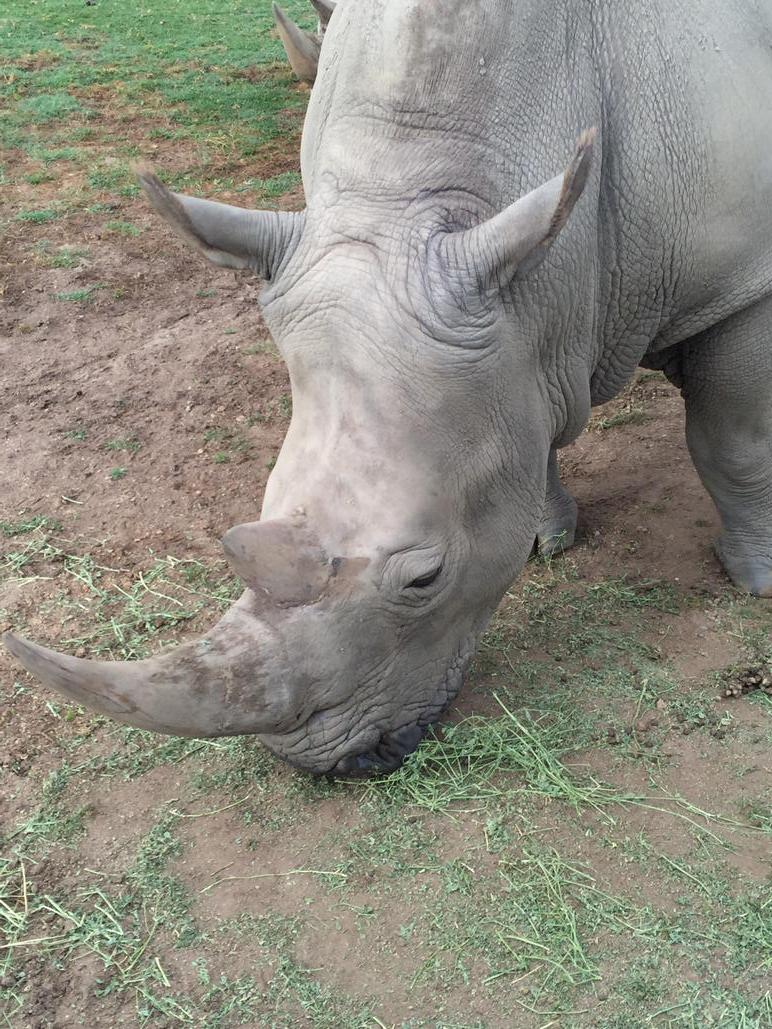 #Rhino horn is not medicine. Never was, never will be. #stopkillingrhinos #Rally4Rhinos http://t.co/NgB9Ti5oRz