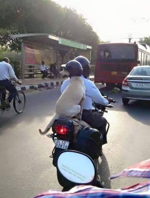 If this photo by @Bhayankur doesn't go viral, I don't know what will! Cc @smitaprakash @SachinKalbag @acorn @sidin  http://t.co/OEVxhb10Pr