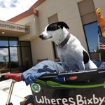 Wheres Bixby? This weekend the famous dog was in #SantaMaria: http://t.co/0Qu4HyGh6W #WheresBixby http://t.co/I1Et5VT6Mg