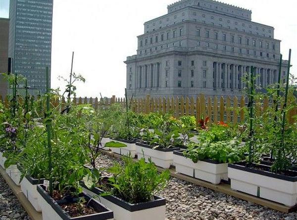 Meer #groenten uit eigen stad, hoe doen we dat? Idee: meer #dakmoestuinen @rooffood @streeksgewijs @amarinsg http://t.co/M6xJOV3Pr2