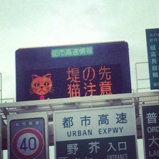 猫注意報と猫 http://t.co/TmWu1NBXPi