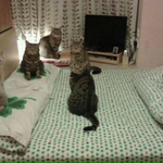 Quando você ta com seus amigos no seu quarto e de repente sua mãe entra http://t.co/mhstJD54LO
