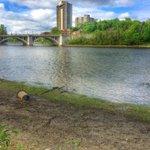 Dont see the water this low too often. Rideau/Vanier #Ottawa @BlacksWeather http://t.co/e3ta8SHlQa