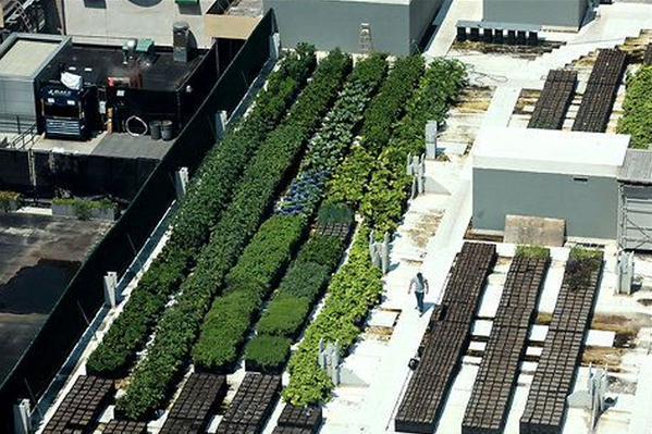 Hoe verhogen we #duurzaam de waarde van daken? Oa. met #daklandbouw @VitaleGroenStad @NatuurvisiesNL @UITJEEIGENSTAD http://t.co/dir4Acz5lN