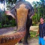 RT @IBNLiveTech: Is this the world's first 'elphie'? How this elephant took a selfie http://t.co/olo6TMWlll http://t.co/pOPIZeMQJc