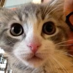 #Cats and #kittens looking for forever homes at OAR in #Cincinnati! http://t.co/CVk1rhAtNs #adoptdontshop #rescuecat http://t.co/nqTm81As9G