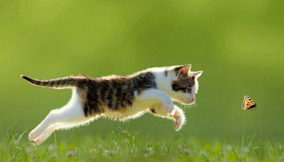 '토끼를 잡을 땐 귀를 잡아야 하고 닭을 잡을 땐 날개를 잡아야 하고 고양이를 잡을 땐 목덜미를 잡아야 하고 사람을 잡을 땐 마음을 잡아야 한다' http://t.co/wovSQGMdLG