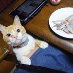 ネコ飼いにとって刺身を食べると言う事はスポーツに等しい。  繰り出される猫たちのチョーダイ攻撃をかいくぐりながら刺身を口に運ぶのは至難の業である。 http://t.co/tKN3AE00AK
