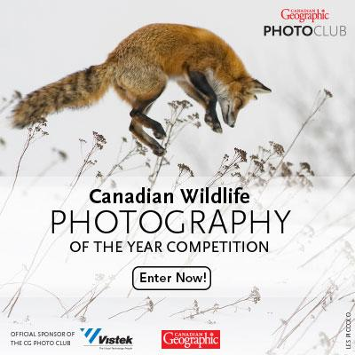 Have you entered the @CanGeo Wildlife Photography of the Year Competition yet? http://t.co/9KH60yD5XP #photography http://t.co/KCAsU2Q5yw