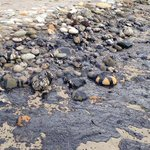 JUST IN: Goleta declares state of emergency. Says oil slick will hit Goleta beaches today: http://t.co/BCgS7kE8cw http://t.co/FA48bBpisG