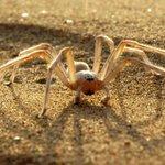 Aranha que dá duplo twist carpado está na lista das 10 novas espécies para 2015. http://t.co/J0roXxzmeD http://t.co/uNzUKXZr0F