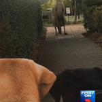Thats a BIG ROO! In your news at 6pm, the giant kangaroo keeping northside residents on the hop #7News http://t.co/wNPeZx3PPQ
