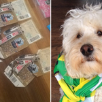 This Norwich City fan got a shock - when his dog ate his play-off final tickets http://t.co/EeozpirG25 http://t.co/JpSQ6jLnxY