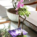 Exposição de flores começa hoje na Zona Norte de Natal - http://t.co/0frNYvNUJL http://t.co/xj3IW4JAG5