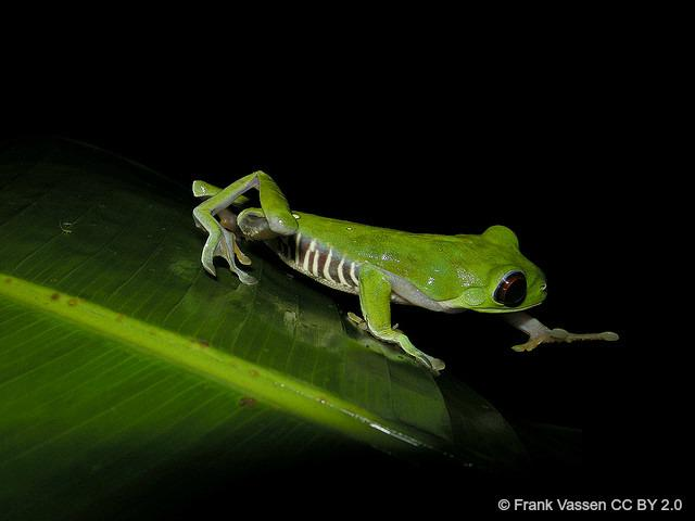 Today is International Day for Biological Diversity - what does biodiversity mean to YOU? #IDB2015 http://t.co/LzZnwTYRuc
