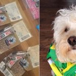 Naughty dog eats Norwich fans three tickets for Championship play-off final at Wembley http://t.co/jeQmAfD5yX http://t.co/1OmP0YgcM4