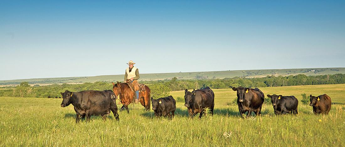 Cattle Inventory: Ranking of all 50 states #1 Texas #2 Neb #3 Kan http://t.co/XG2p5Cfljg #agchat #ranchlife http://t.co/NNV1xrVnhL