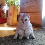 Have you seen a cat that sits like me? http://t.co/yY76dt9HhM