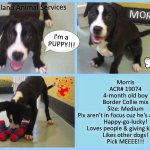 Its not your ???? Morris is a wiggly little bundle of #PUPPY love! #adopt #Oakland #CA #dog ????-> http://t.co/jPcdnqjd0m http://t.co/FD899mmAfp