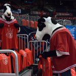 Big thanks to our partners @ChickfilA (more specifically the cows) for helping us dress the arena! #TrueToAtlanta http://t.co/eq7ZcTzuPl