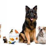 ¿Por qué debemos tener una mascota? http://t.co/LvxdMWy3iH (vía @eme_demujer) http://t.co/SQi7rhlMg4