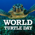Its #WorldTurtleDay! Did you know turtles inspired Game of Thrones? Learn some shell-shocking facts at 7:55am. #sun7 http://t.co/4fRt0i3Ewt