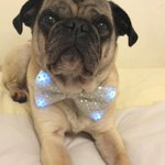Image of pugprom2015 from Twitter